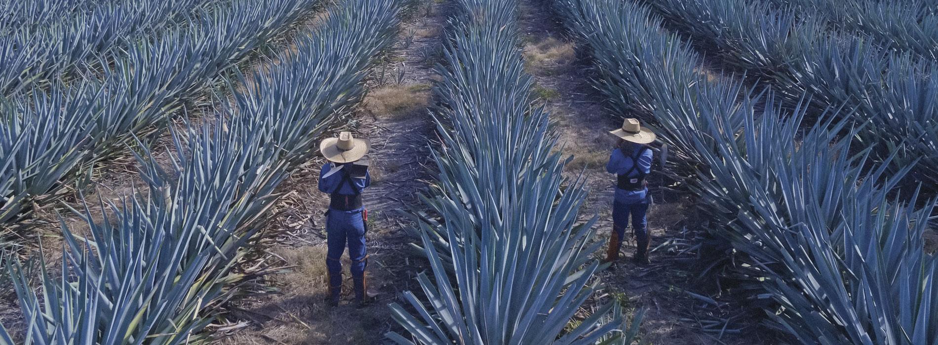 tequila-don-julio